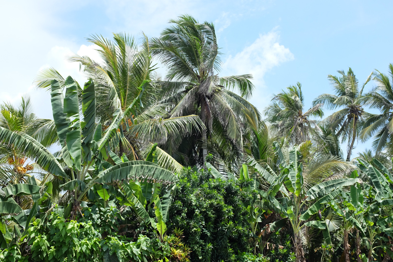 Sri Lanka: 6 Orte zum verlieben